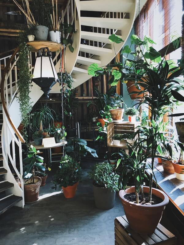 Indoor plant benefits